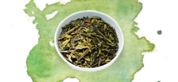 Grünen Tee im Hausbrandt Onlineshop kaufen